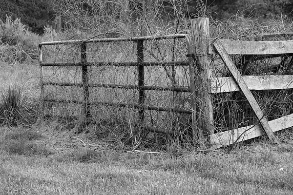 old metal fence overgrown weeds