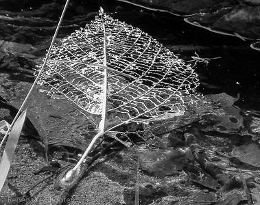 skeletonized leaf-2