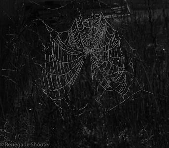 b-w spider web