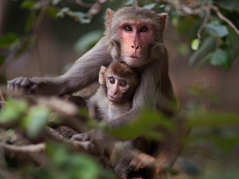 The Giving Lens India Participant Tessa Kit Zawadzki captured this image of a mother and baby monkey outside of the Taj Mahal.   Canon 5D Mark II, Sigma 85mm, 1/1250 sec, f/1.4