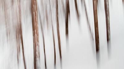 Rêve d'hiver