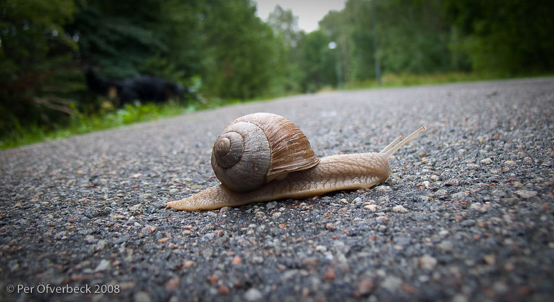 Trail of the Snail...