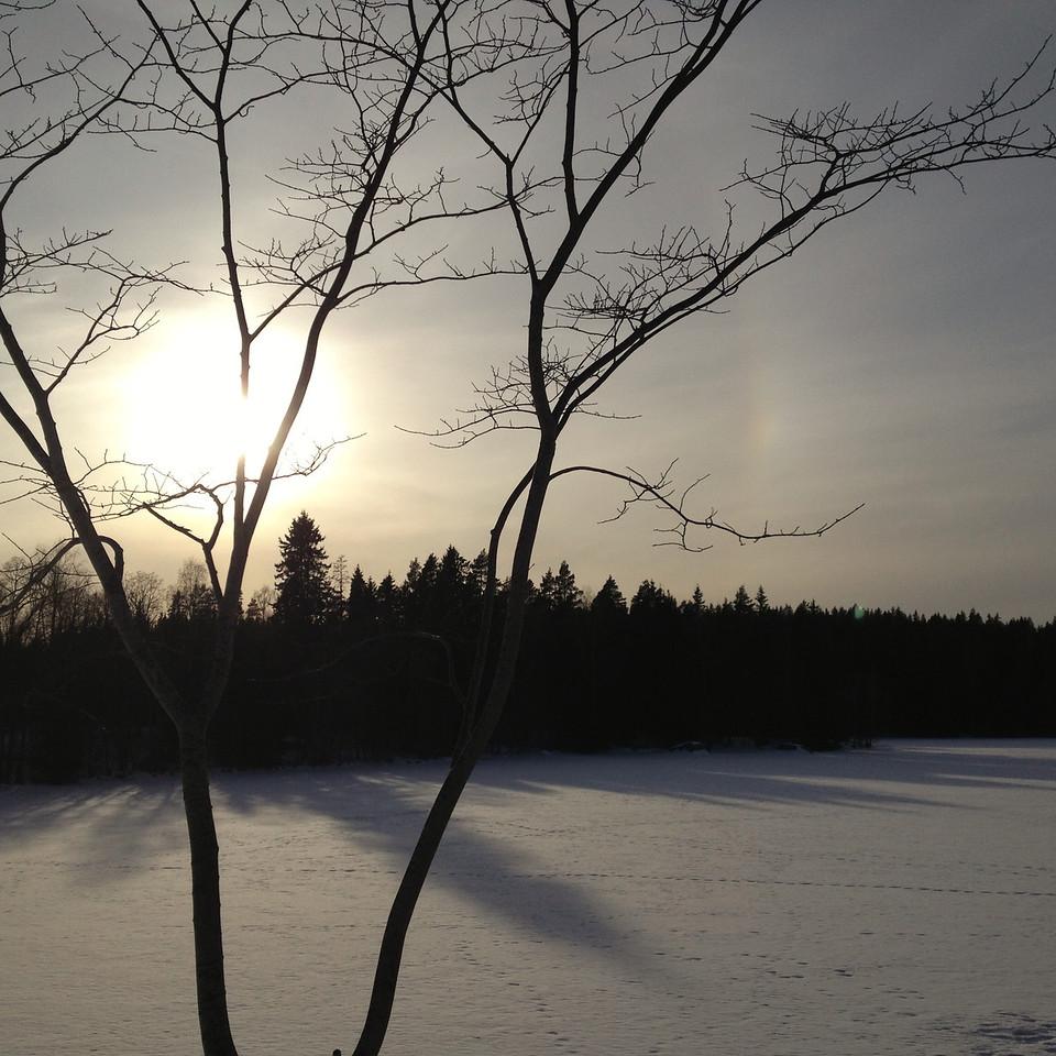 Träd, sol, snö