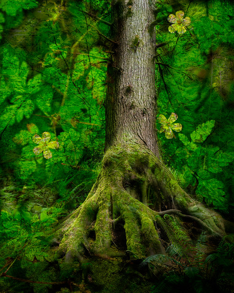 Oregon Roots.  Its good to use your imagination.
