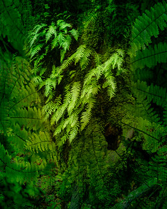 Heart of the Forest.  3 image composite.