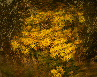 Sunflowers.  3 blended images.  I was really pleased with this one.  From last evening's outing at Champoeg SP.