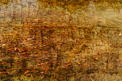 Color and Texture without Form. 1