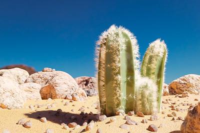 20190703 - Cacti