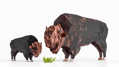 20190427 - Bison Bison