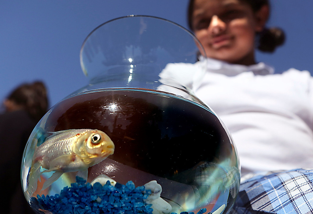 . Holy Cross student Karolina Espinosa brought her goldfish Anarajado to school Wednesday to be blessed.   (Shmuel Thaler -- Santa Cruz Sentinel)