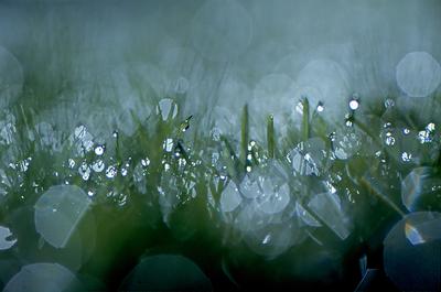Light on wet grass 1987