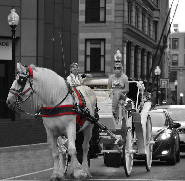 Horse & Carriage<br /> Boston, Ma