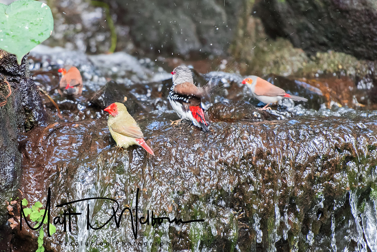 Various Finches