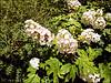 Hortensia tuin Zuidwolde