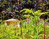Tuin Zuidwolde