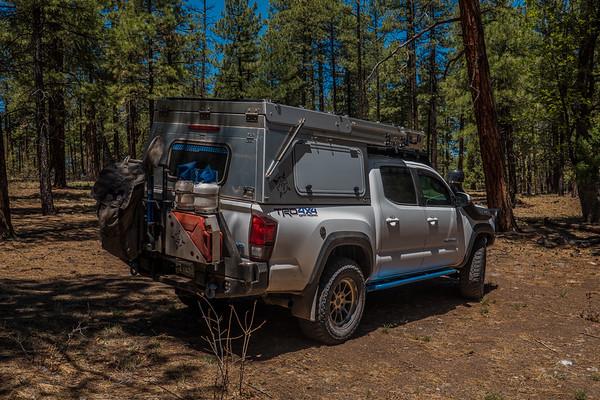 Tacoma, Blue Wilderness, Greenlee County, Arizona USA