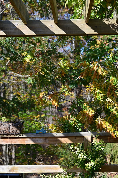 Simple scene off the back deck, some of the first in-camera images from the Nikon Z6.