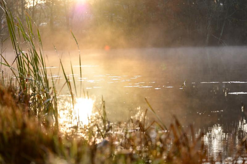Morning dew over California Jim's Pond, Wakefield, RI