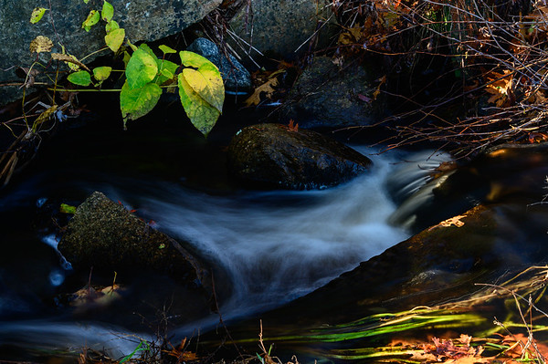 A tranquil scene from Tri Pond Park, Wakefield, RI.