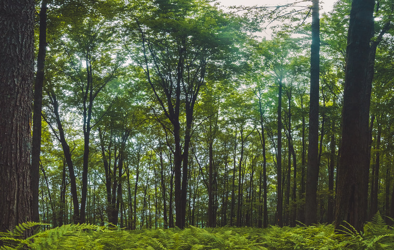 Panorama of the trail at one of the highest points. Being there really makes you feel small in comparison to everything else. Sorry for the smudges in the upper parts of the tress. I was filming walking through the ferns just before I stopped to take this photo.