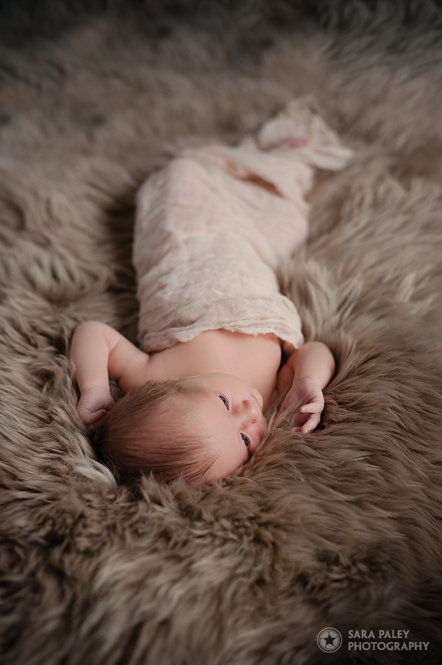 newborn photography, burnaby newborn photographer, sara paley photography, newborn, baby, vancouver newborn photography, lifestyle photographer, family portraits, north vancouver photographer #paleypix #portraitphotography