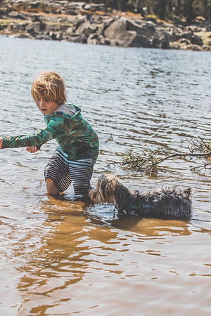 Yorkshire Terrier playing in the water