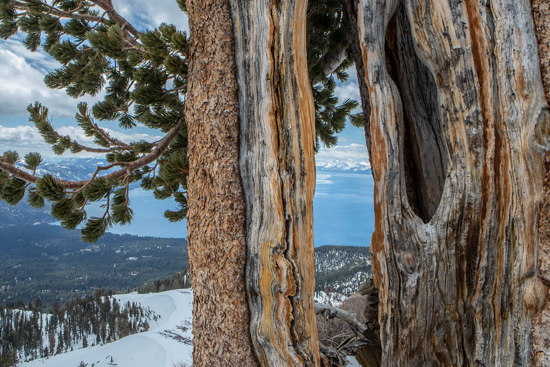 Tree Lake Tahoe