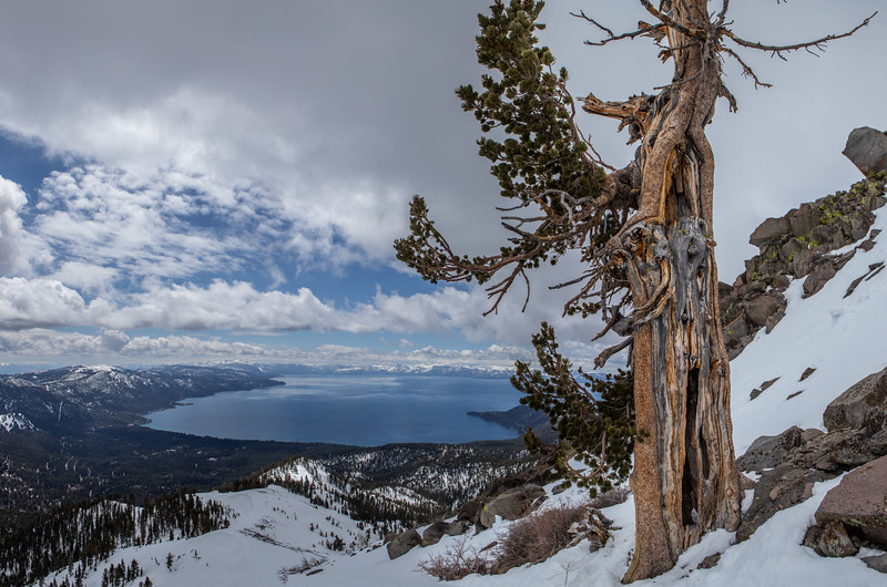 Lake Tahoe Lone tree