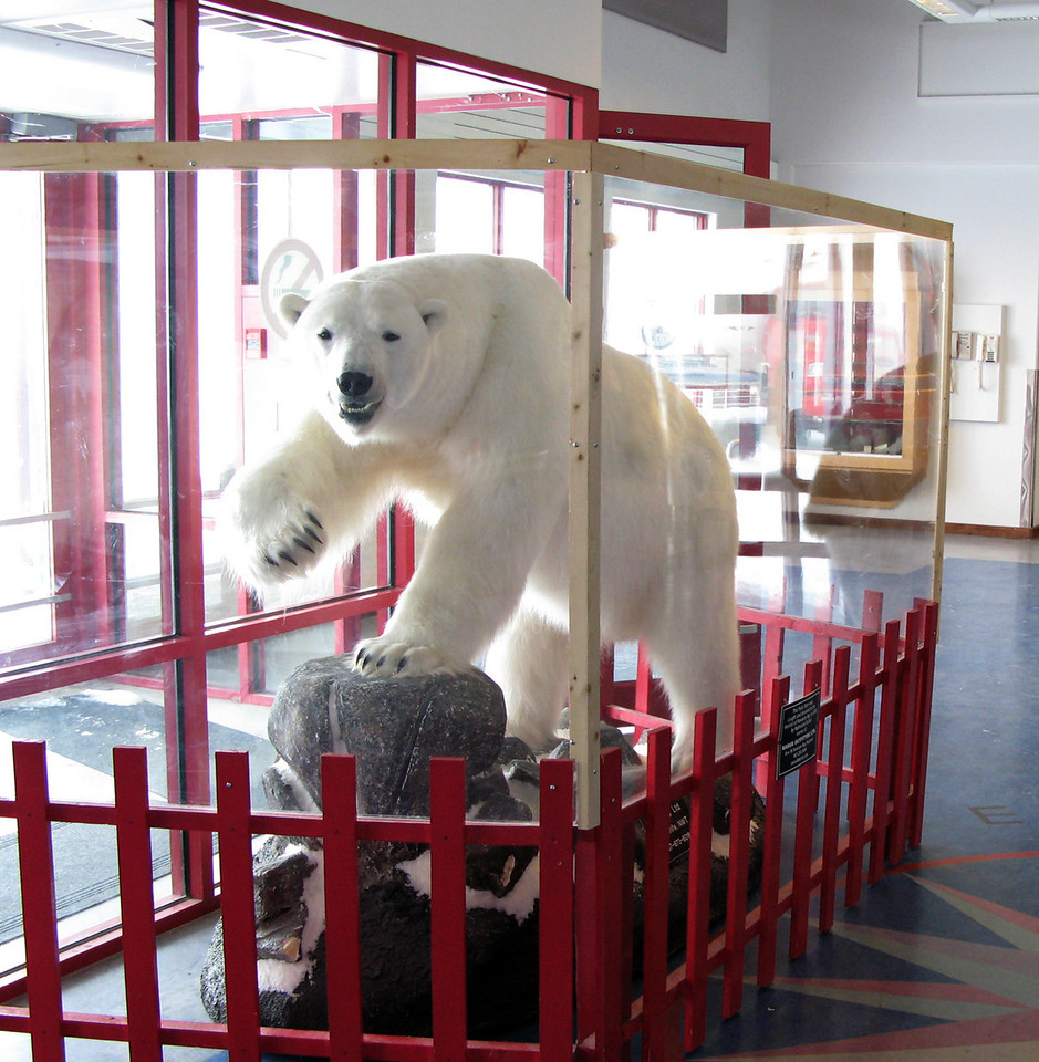 The only polar bear I saw was at the airport in Resolute Bay.