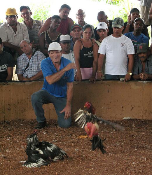 Los gallos peleando (Cockfight in Cuba) Part 2