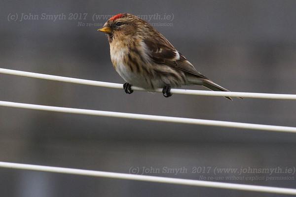 Bird Feeder - Castletown geoghegan