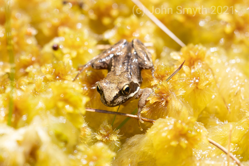 insects (25 of 36).jpg