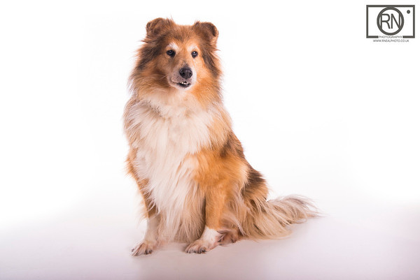 Studio Pet photography in county durham