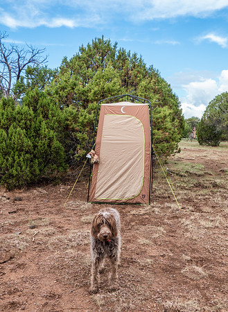 Poo Protector: Pixelated jaypeg, spinone italiano. Yeager Canyon, Coconino Co. Arizona USA