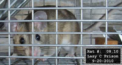 20Sep2010 Pack Rat Mugshot