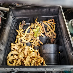 packrats in truck_18Aug2019_003
