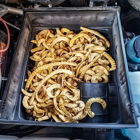 packrats in truck_24Aug2019_011