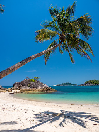 Palm tree on Dorilla Beach, Bedarra Island