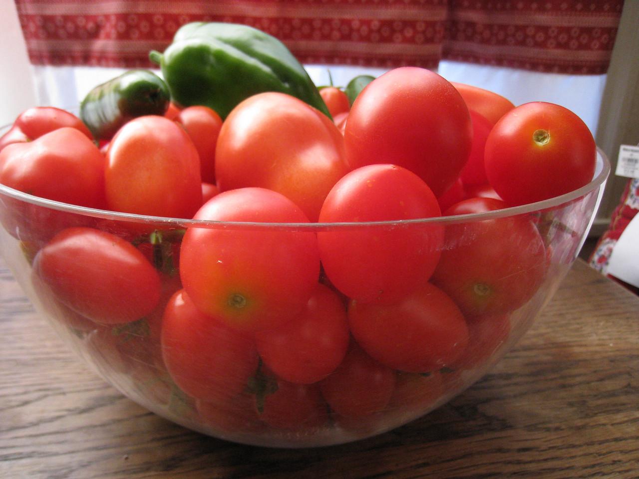 Tomato harvest begins!