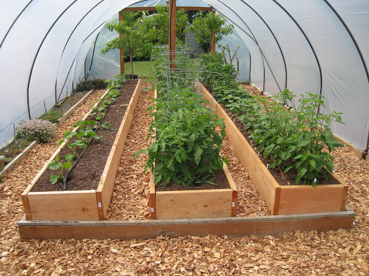 Cucumbers, Tomatos & Peppers