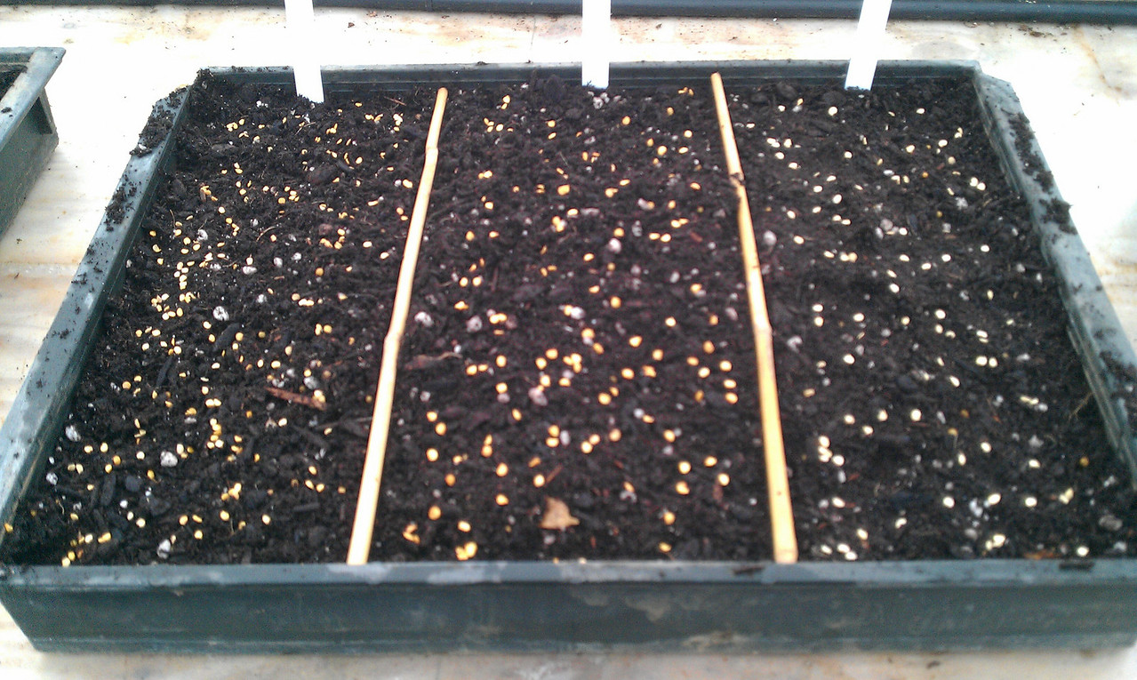 A bit late but finally got the 12 kinds of Pepper we are growing this year sown!