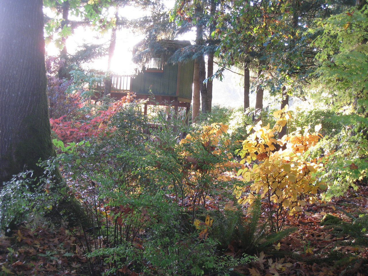 The Back garden in Early November.