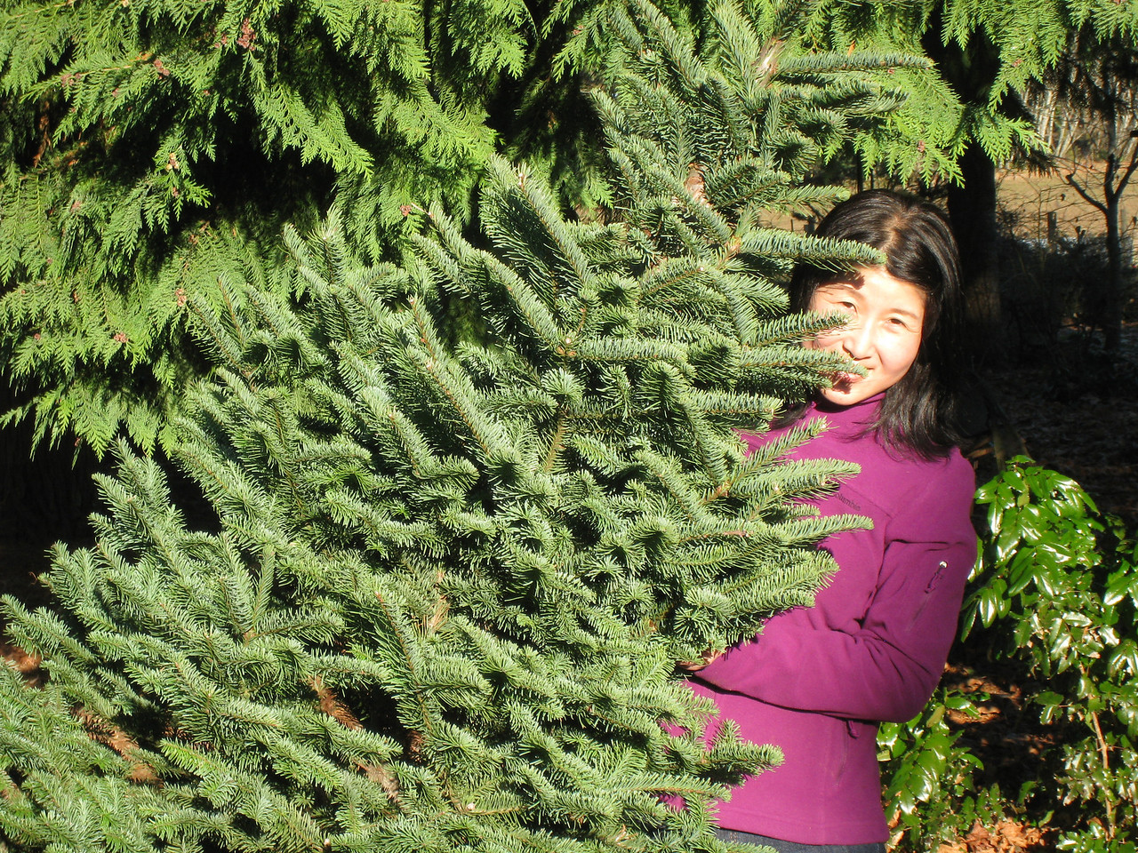 Chiyoko fighting with our Christmas Tree.