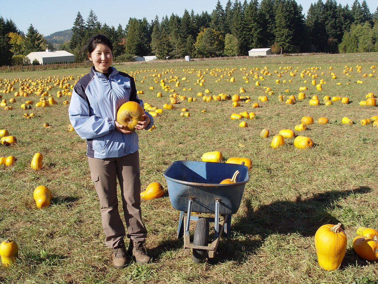 This past weekend we went pumpkin collecting.