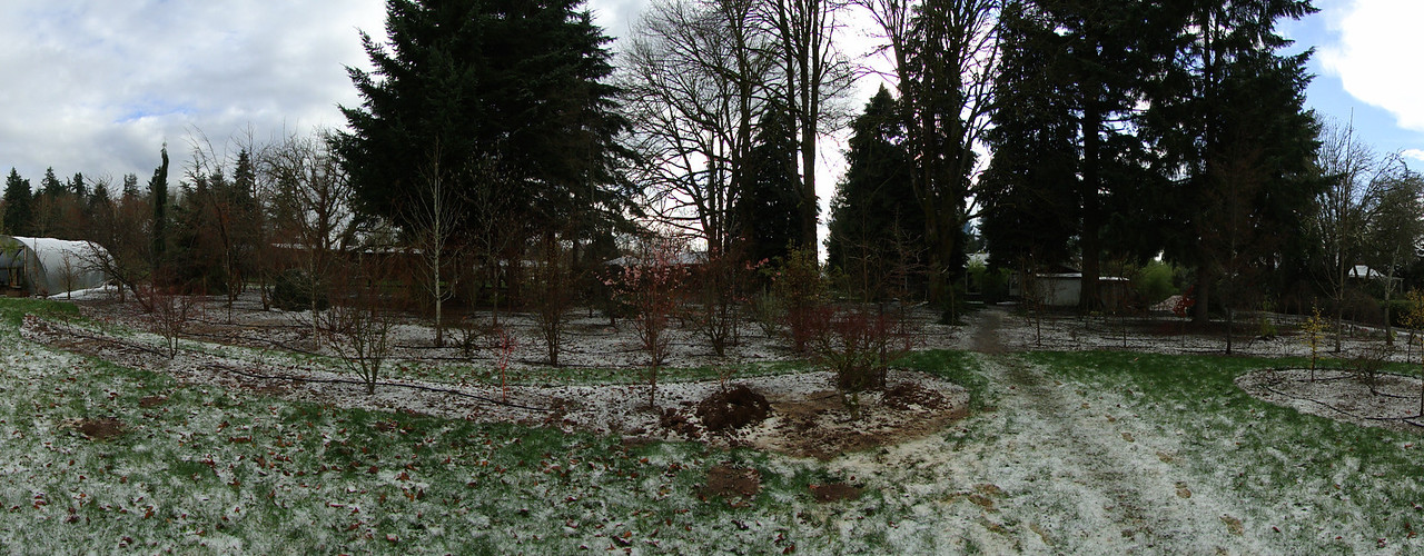 Back Garden Pano, March 18th 2012.