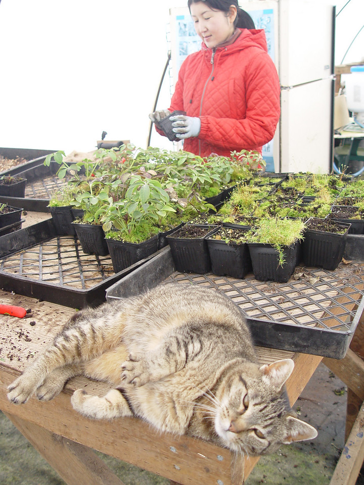 Pickle - Not much help really when it comes to grading & cleaning up Hellebore liners, & she wonders why we don't pay her!