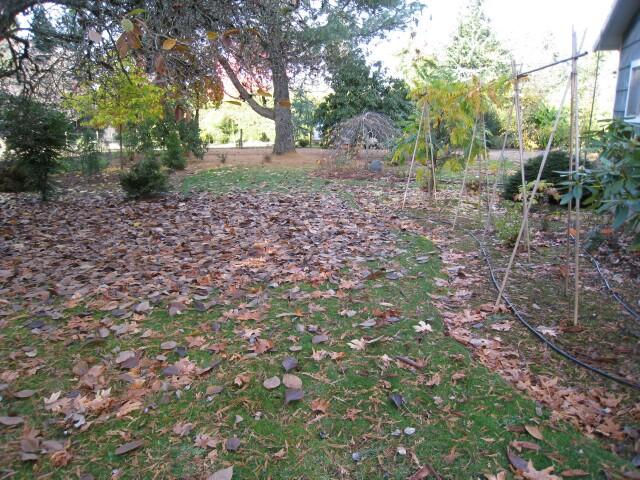 Chiyoko has been busy raking Leaves :^)