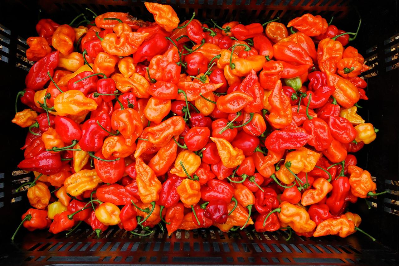 Our 2013 Hot Pepper Crop..