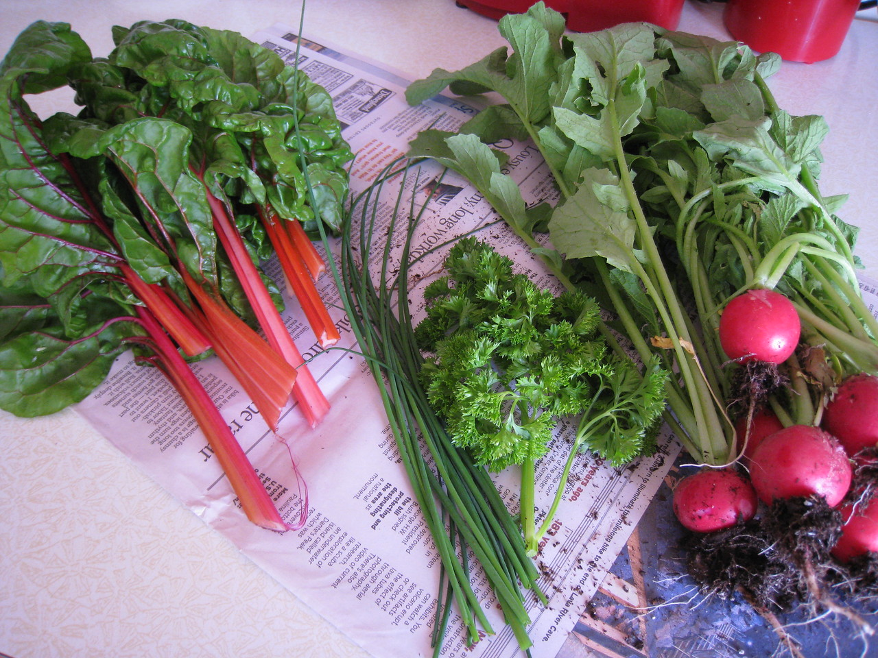 Our first veggies of the year from the garden, Rainbow Chard, Chives, Parsley & Radishes :^)...