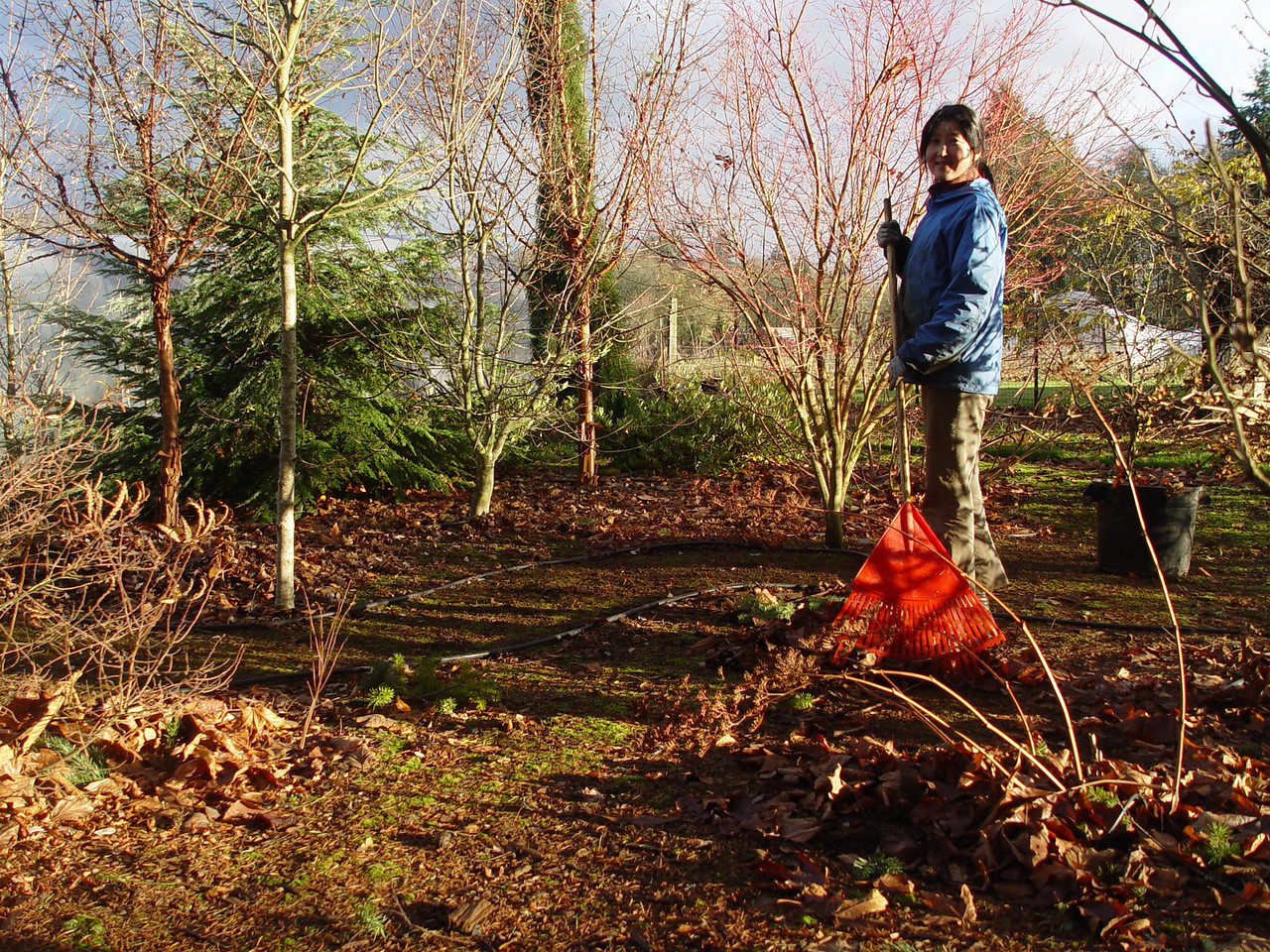 A necessary Autumn evil, Raking leaves!
